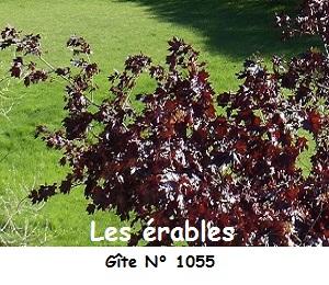 Erable rouge gite 1055