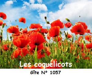 Les coquelicots gite 1057