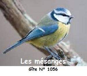 Mesange avec gite 1056 300x260 pixels